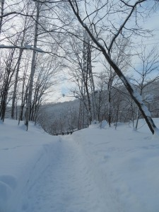 遊歩道冬2